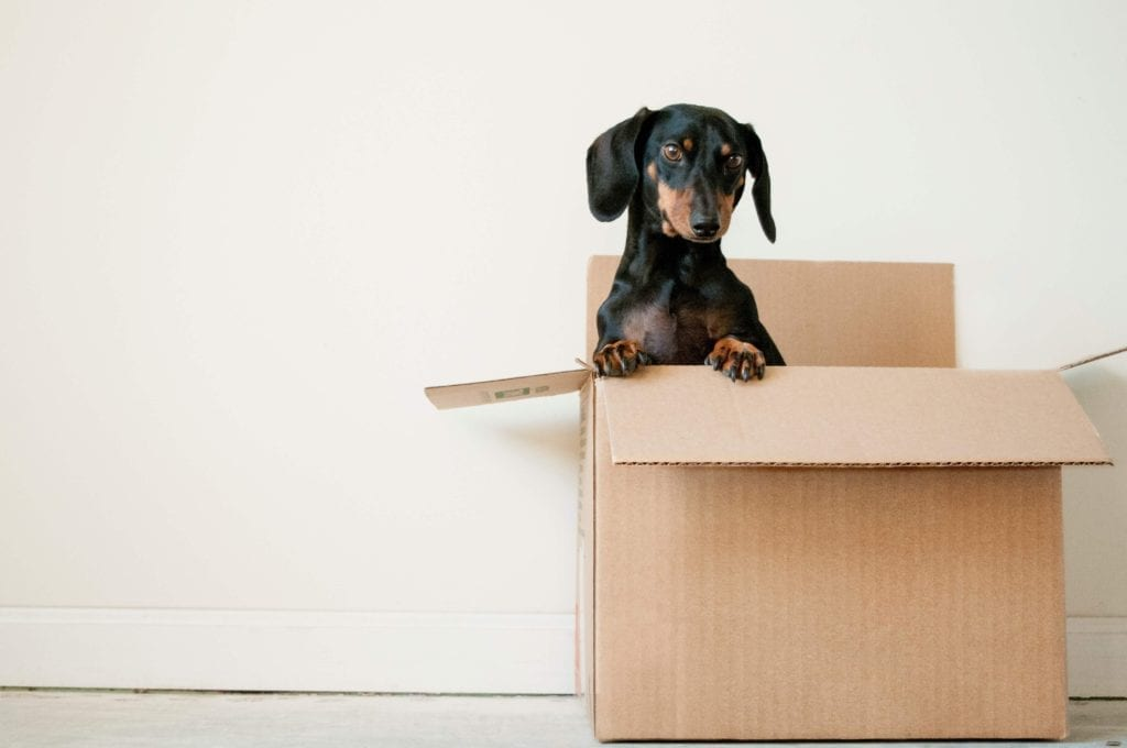 Label boxes - 10 things to remember when moving home - Daschund dog in box
